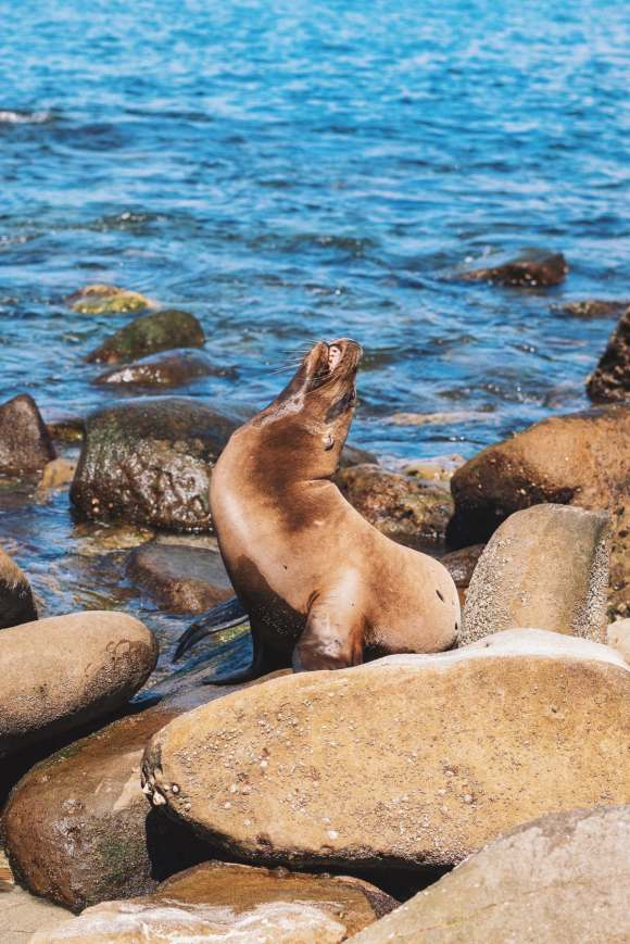 Sea Lion tanning in the sun.